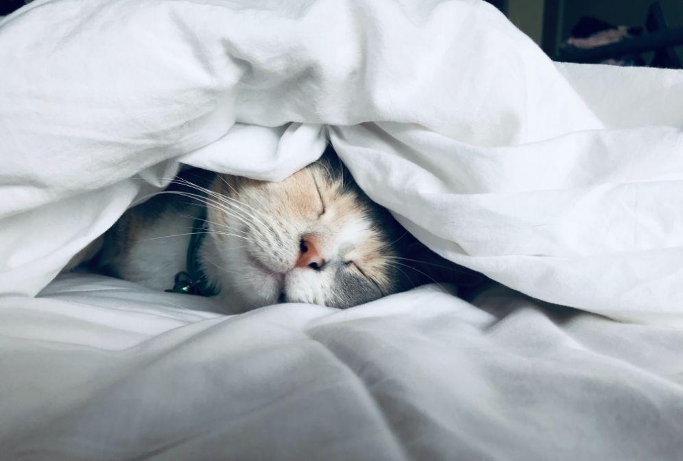 布団の中で熟睡中の猫